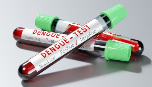 Illustration : Dengue